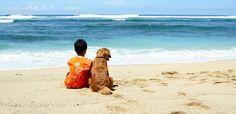 Dog-friendly beaches in the Western Cape. #dogfriendlybeaches #beachescapetown
