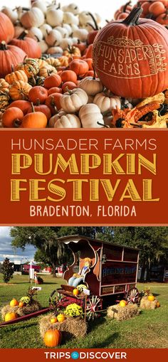 Hunsader Farms Pumpkin Festival is Perfect Fall Fun in Florida Florida Vacation, Vacation Trips, Florida Festivals, Fall Vacations, Florida Adventures, Fun Fall Activities, Pumpkin Farm, Fall Pictures, Along The Way