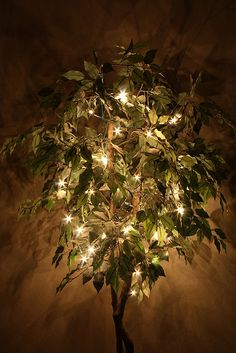 I have a ficus tree in the living room that I keep little twinkle lights on. I passed by it and saw the fun shadow on the ceiling and knew right away what I'd submit to DPS. Porch And Balcony, Balcony Plants, Balcony Ideas, Tree Lighting, Outdoor Lighting, Ficus Tree Indoor, Tree House Decor, Home Decor, Tree Support