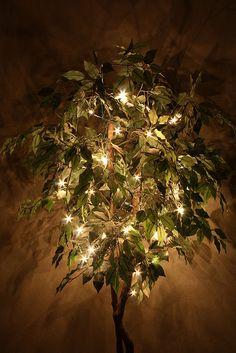 Lighted Ficus Trees