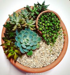 Idea Of Making Plant Pots At Home // Flower Pots From Cement Marbles // Home Decoration Ideas – Top Soop Succulent Bowls, Succulent Gardening, Succulent Arrangements, Succulent Terrarium, Planting Succulents, Indoor Gardening, Suculentas Diy, Cactus Y Suculentas, Mini Cactus Garden