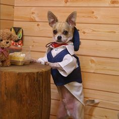 This chihuahua picture is one of my very  favorites ... :) …