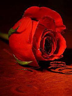 A red rose for you - Moja strona Roses Gif, Flowers Gif, Beautiful Rose Flowers, Dark Flowers, Beautiful Gif, Simple Flowers, Hearts And Roses, Red Roses, Orquideas Cymbidium