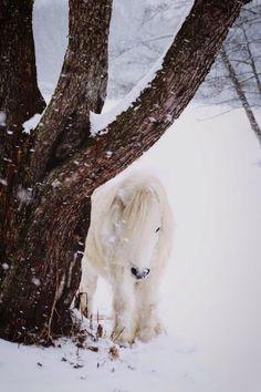 """myequinedlife: """" Pony in the snow January 2014 """" Horses In Snow, Tiny Horses, All The Pretty Horses, Beautiful Horses, Farm Animals, Cute Animals, Winter Horse, Tier Fotos, Winter Photos"""