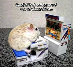 Animal Memes – Best gaming mouse