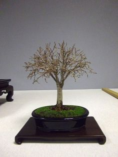 El bonsái y yo: ¿Secundarios?