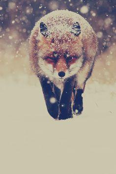 invierno nieve animal lindo zorro