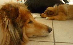Samen slapen.....Rust voor het oudje en rust voor het pupje...
