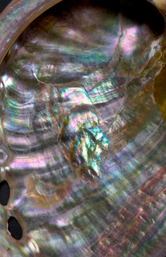 Mother of pearl, or nacre, is renowned for both its iridescent beauty and its amazing toughness. Berkeley Lab scientists mimicked nacre's microstructure to synthesize a tough new ceramic. (Photo by Roy Kaltschmidt, Berkeley Lab Public Affairs) Claudia Tremblay, Foto Macro, Secrets Revealed, Shell Art, Gems And Minerals, Mother Pearl, Texture, Sea Creatures, Stones And Crystals