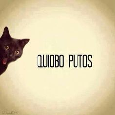quibo putos! @Adriana Tapia Gustav!
