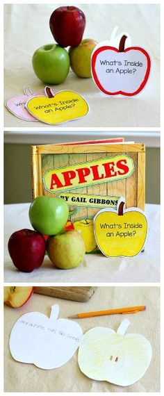 Fall Science for Kids: What's Inside an Apple? Hands-on science activity inspired by the children's book, Apples by Gail Gibbons. Includes a free recording sheet- an apple booklet! ~ BuggyandBuddy.com