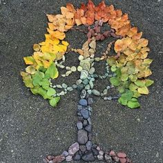 """botanicalwandersMade this one from stones and cottonwood leaves collected from along the Skokomish River.some of my family helped me to seek out certain colors, so its rightly titled """"family tree"""" Nature Activities, Autumn Activities, Autumn Crafts, Nature Crafts, Land Art, Ephemeral Art, In Natura, Leaf Crafts, Diy"""