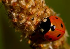 Ladybird ...
