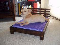 Modern Platform Dog Bed