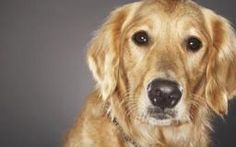 Homemade Detangler for Long Hair Dogs | Dog Care - The Daily Puppy