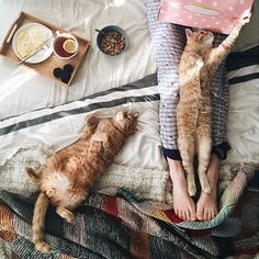 just add yarn , perfect sunday setting , cats , coffee , bed and a ball of wool project on the go .