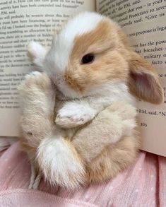 Cute Baby Bunnies, Baby Animals Super Cute, Cute Little Animals, Cute Funny Animals, Cute Cats, Cute Babies, Cutest Bunnies, Mini Lop Bunnies, Baby Animals Pictures