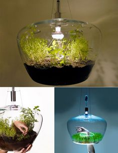 Czech designer Kristyna Pojerova recently showed off a beautiful mini-greenhouse. It can be mounted on a lightbulb, making use of the otherwise useless heat wasted on bulbs, while supplying a unique micro-climate for the plants growing inside.  Neat Idea.....many more on site