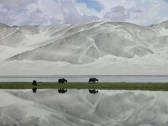 Yaks along the Karakoram Highway