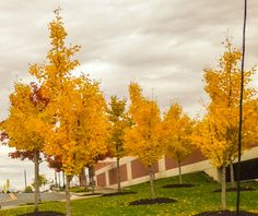 Loudoun County is gorgeous in the fall!