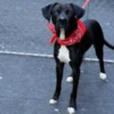 Manhattan NY.  Jackson.  Male.  1.5 yrs.    Dies in a.m.  See Urgent Part 2 on fb.***RESCUED***