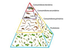 cadeia alimentar aquatica 6