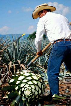 Jimador Tequila Jalisco, Mexico... ~D~