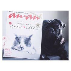 #にゃんこlove . げっとー♡拝読するわん🐾 #anan #ねこ #黒パグぺろ .