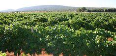 Visit some vineyards in Binissalem