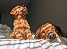Com - favourite thing - - Adorable Animals - Hunde bilder Cute Baby Animals, Animals And Pets, Funny Animals, Cute Dogs And Puppies, I Love Dogs, Doggies, Puppies Puppies, Cute Creatures, Fur Babies