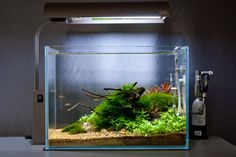 Nano Nature Aquarium Image by James Findley, The Green Machine