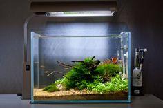 Nano Nature Aquarium Image by James Findley, The Green Machine