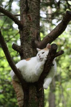 Taking a cat nap. Proof cats will sleep anywhere I Love Cats, Crazy Cats, Cool Cats, Funny Cats, Funny Animals, Cute Animals, Funny Jokes, Beautiful Cats, Animals Beautiful