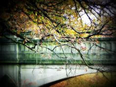A beautiful bridge at Saint Mary-of-the-Woods College, photo by Amanda Compton
