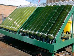 algae-biorector for the production of algal SCP (Single Cell Protein)