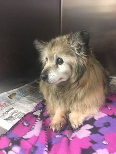 Woman Sees Facebook Pic Of Sad Senior Dog And Drops Everything To Save Him