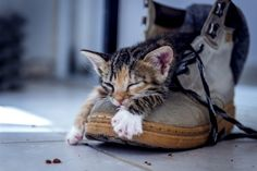 Power nap by Eden Naggel on 500px