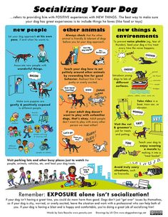 Socializing a dog with many situations | Socializing Your Dog by lili.chin, via Flickr #doginfographic #doghealth