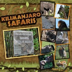 safari scrapbook layouts safari layout safari and zoo scrapbooking ...