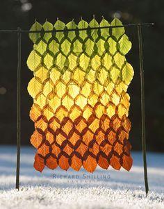 Shilling Autumn Beech Sun Curtain