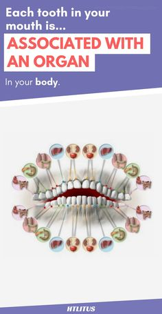 Did you know that each tooth in your body represents an organ. And if your tooth hurts it could indicate an issue in one of your organs.