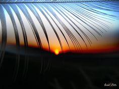 "Feather Sunset - <p><a href=""https://www.facebook.com/ismailbilir.400""><img src=""http://www.ismailbilir.com/ismail_bilir/facebook.png""></a> <a href=""https://www.instagram.com/ismail_bilir40/""><img src=""http://www.ismailbilir.com/ismail_bilir/instagram.png""></a> <a href=""https://twitter.com/ismailbilir40""><img src=""http://www.ismailbilir.com/ismail_bilir/twitter.png""></a> <a href=""http://www.ismailbilir.com""><img src=""http://www.ismailbilir.com/ismail_bilir/ismailbilir.png""></a> <a…"