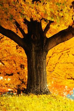 My childhood home was surrounded by big trees that flamed in orange and crimson.