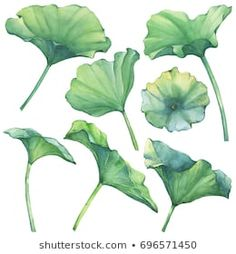 Set with Indian lotus leaves (water lily). Watercolor hand drawn painting illustration isolated on white background. Watercolor Lotus, Lotus Painting, Lily Painting, Watercolor Flowers, Lotus Flower Art, Lotus Art, Leave In, Lotus Leaves, Plant Leaves