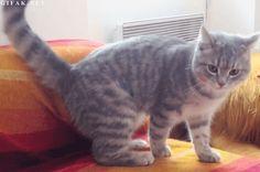GIF: Huida haciendo la croqueta, versión gato