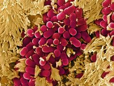 What Is the Microbiome?