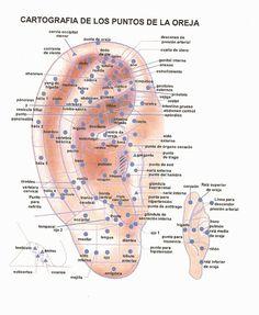Consultorio Medicina Natural: Puntos reflejos de la Oreja