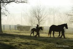 The business of Thoroughbred racing and breeding is unlike any other business in the world. Woven into its fabric is a passion for sport, love for animals, honed skill for one's trade, keen sense of strategy, calculated risk and a whole lot of luck. The Thoroughbred business has evolved significantly since the days when racing …