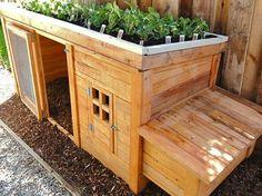 Chicken coop rooftop garden