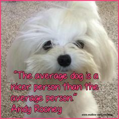Maltese Dog cute Maltese puppy quote - Maltese Dogs Quotes so true, cute and/or funny! The dog quotes to make you smile Maltese Dogs, Dogs And Puppies, Teacup Maltese, Dogs 101, Terrier Puppies, Puppy Quotes, Important Life Lessons, Malteser, Dog Rules